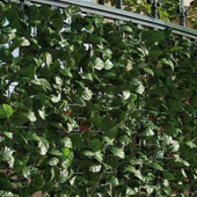 Image of Artificial Hedge Hedera fencing